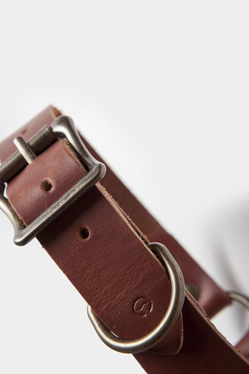 leather-puppy-collar-detail